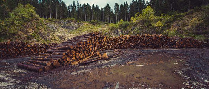 Exploitation forestiere